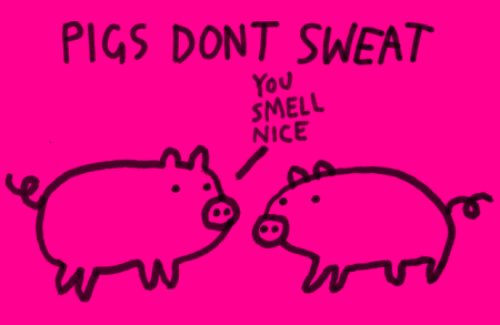 pigs-dont-sweat