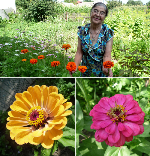 Бабусин квітник