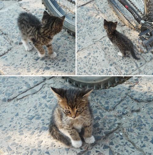 Безпритульше кошеня