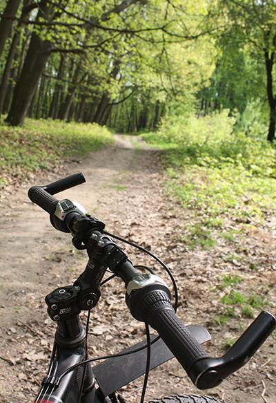 В лісі